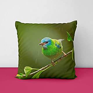 41nL0Q3Ym2L. SS320 Colour Full Birds Square Design Printed Cushion Cover