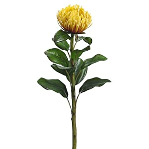 "28"" Needle Protea Spray Yellow (Pack of 12) 106"