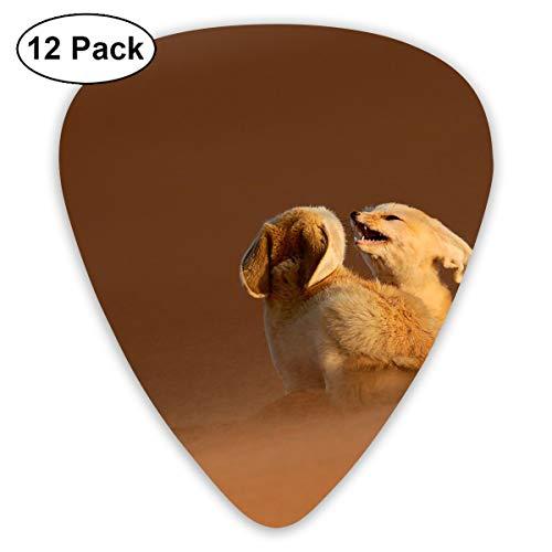 V5DGFJH.B Desert Fox Classic Guitar Pick Player's Pack for Electric Guitar,Acoustic Guitar,Mandolin,Guitar Bass]()