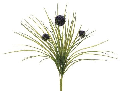 18-Allium-Bush-Purple-Pack-of-12