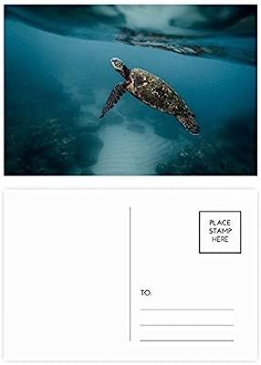 DIYthinker Mar Océano tortuga Ciencia Nature Picture ...