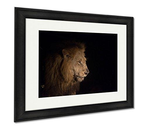 Ashley Framed Prints Lion At Night, Office/Home/Kitchen Decor, Color, 30x35 (frame size), Black Frame, - Ebony Panthera