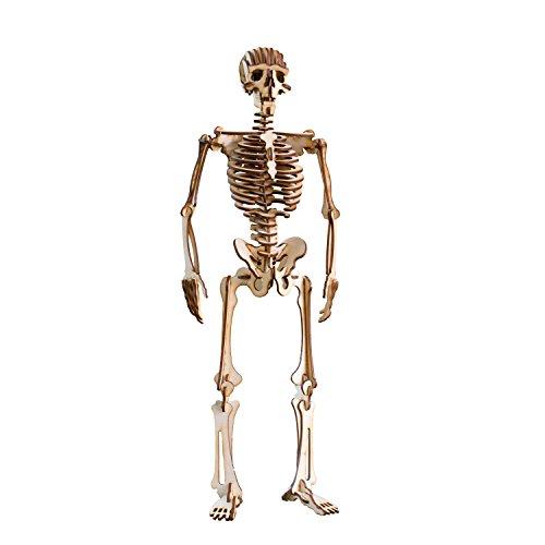 Crafts - Human Skeleton - Raw Wood Model Kit (Halloween Skeleton Puzzle)