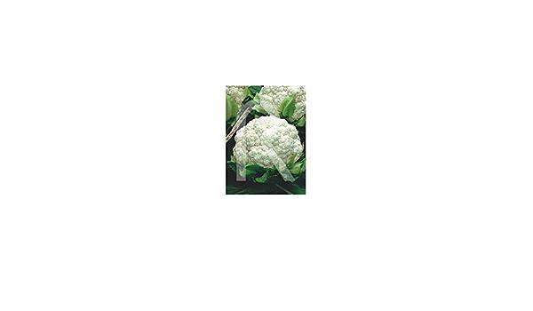 Rocalba - Semilla de coliflor: Amazon.es: Jardín