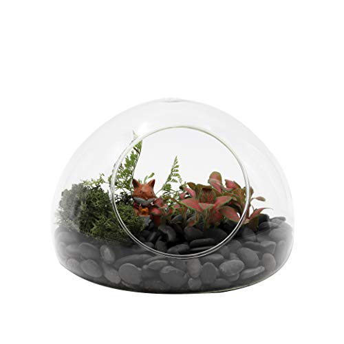 NCYP Hand Blown Glass Egg Shaped Round Bubble Terrarium Glass Globe Cute Miniature Micro Landscape Modern Minimalist Trendy Planter Terrarium ()