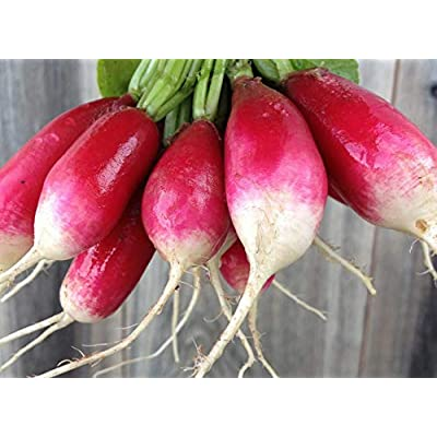 French Breakfast Radish Seeds, 200+ Premium Quality Heirloom Seeds, Popular & Delicious!, On Sale, (Isla's Garden Seeds), Non GMO, 85-90% Germination Rates, Highest Quality Seeds, 100% Pure : Garden & Outdoor