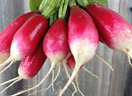 - French Breakfast Radish Seeds, 200+ Premium Quality Heirloom Seeds, Popular & Delicious!, On Sale, (Isla's Garden Seeds), Non GMO Organic, 85-90% Germination Rates, Highest Quality Seeds, 100% Pure