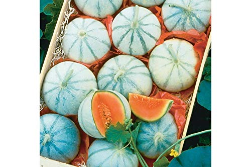 (Pakuda F1 Hybrid French Savor Melon 25)