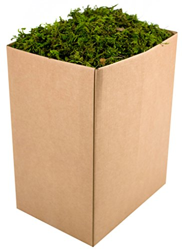 SuperMoss (25326) Forest Moss Preserved, Fresh Green, 5lbs (Wedding Topiary)