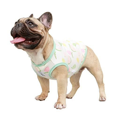 french bulldog pet - 5
