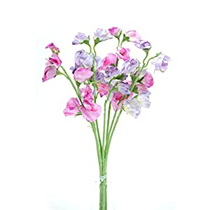 Floristrywarehouse Artificial Silk Sweetpea Pink & Lilac Stems Sweet Pea Flowers 16 inches