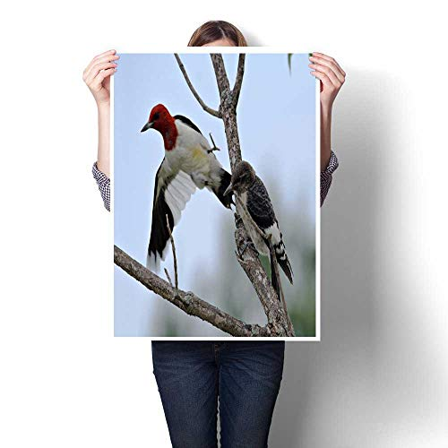 bybyhome Abstract Painting Red Headed Woodpecker Decorative Fine Art Canvas Print Poster K 32