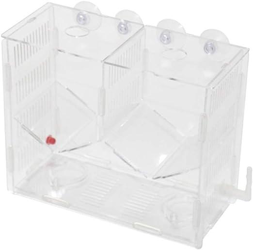 DAYOLY Caja de Cultivo de Peces para Acuario, acrílico Transparente, Caja de Doble Aislamiento, Caja de Cultivo para Peces, hatcherías, cría y Caja de Padres: Amazon.es: Productos para mascotas