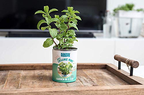 Back to the Roots Kitchen Herb Garden, Complete Herb Grow Kit, Grow Fresh  Herbs Year Round, Variety Pack of Basil, Mint, and Cilantro, Top Gardening
