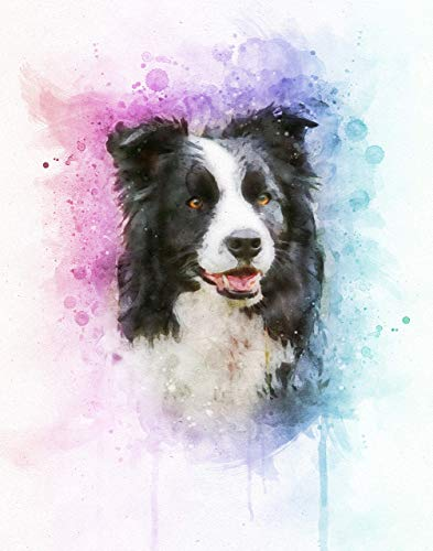Border Collie Watercolor Art Print in Various Sizes - Border Collie Dog Portrait, Decor for a Nursery, Home, or Office - A Great Gift for a Border Collie Lover, Pet - Poster Sheep Breeds