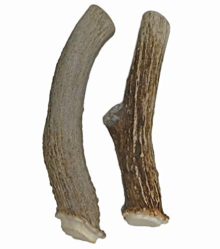 WhiteTail Naturals Premium Extra Large Deer Antlers for Dogs (2 Pack X Large) | All Natural Dog Chews | Extra Large Antler Bully Chew | Made in The USA