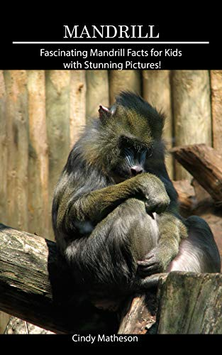 Mandrill Animal - Mandrill: Fascinating Mandrill Facts for Kids with Stunning Pictures!