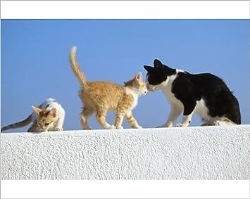 Diseño de gatos Diseño de Feral - negro a blanco con 2 ginger de gatos en de pared: Amazon.es: Hogar