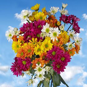 GlobalRose 144 Assorted Fresh Cut Chrysanthemums Daisies Flowers - Fresh Flowers For Birthdays, Weddings or Anniversary. by GlobalRose (Image #3)