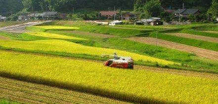 特別栽培米 島根県産 仁多米 コシヒカリ