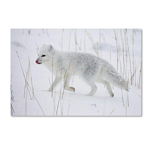 Trademark Fine Art ALI19042-C1624GG Canvas Wall Art White Fox by Robert Harding Picture Library, 16x24