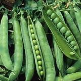 Sugar Lace II Garden Pea Seeds (Sugar Snap), 50+ Premium Heirloom Seeds, ON SALE!, (Isla's Garden Seeds), Non Gmo Organic, 90% Germination