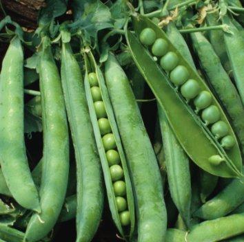 Sugar Lace II Snap Pea Garden Pea Seeds (Sugar Snap), 50+ Premium Heirloom Seeds, ON SALE!, (Isla's Garden Seeds), Non Gmo Organic, 90% ()