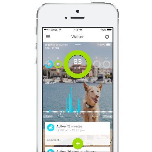 whistle gps pet tracker low cost