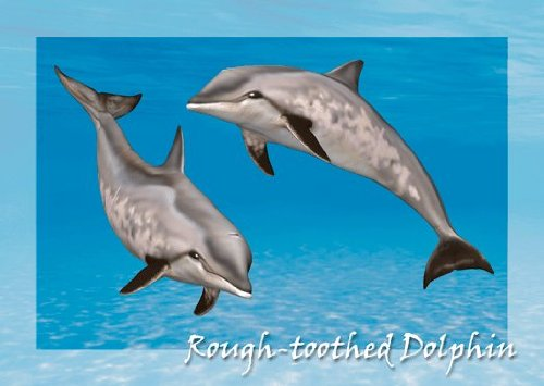 4 Dolphin Collection - 5