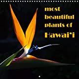 most beautiful plants of Hawai i (Wall Calendar 2020 300 × 300 mm Square)