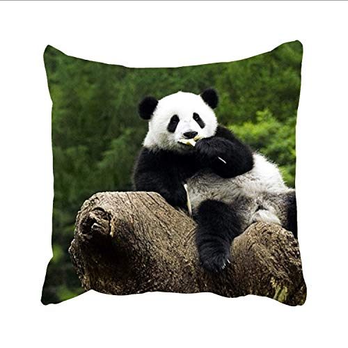 Diego Bedding Set - Dolores Joule Wallpaper Panda Cotton Bedding Pillowcase Zippered Pillow Cover (Two Sides) 18x18 inch
