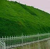 Shopvise Ryegrass Grass Lolium 200Pcsseeds/Pack Lawn Special