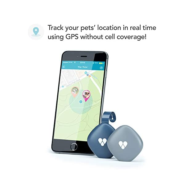 Findster Duo+ Pet Tracker Free of Monthly Fees - GPS Tracking Collar for Dogs and Cats & Pet Activity Monitor 2