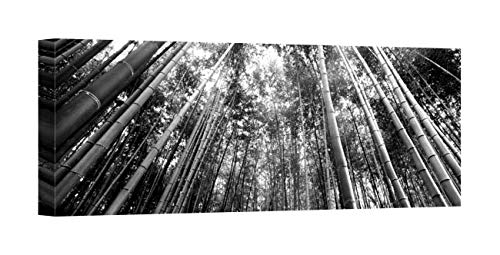 Easy Art Prints Panoramic Images's 'View of Bamboo Trees, Arashiyama, Kyoto Prefecture, Kinki Region, Honshu, Japan' Canvas Art 24 x 9