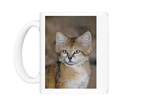Mug of Sand cat (Felis margarita harrisoni) -