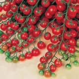 Sweet Million Cherry Tomato (Organic) Tomato 150 Seeds By Jays Seeds Upc 643451295290
