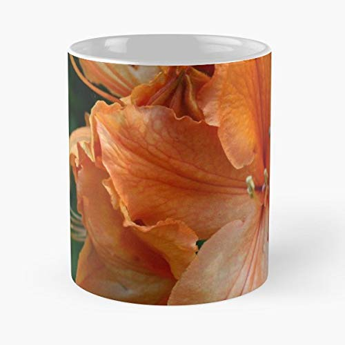 (Alyce Taylor Bloom Closeup Flower - 11 Oz White -coffee Mug- Unique Birthday Gift-the Best Gift For Holidays.)
