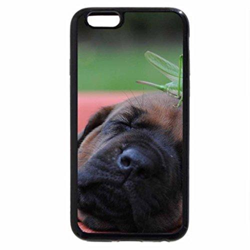 iPhone 6S / iPhone 6 Case (Black) cute animal