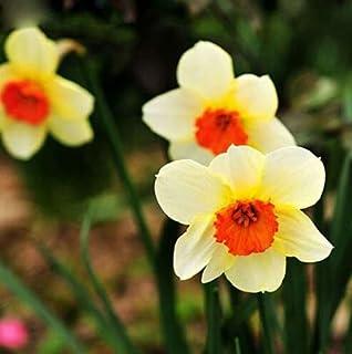 Pinkdose 200 pc Erba di Primavera pianta Succulente pianta Grass Fai da Te Bonsai Vaso Garden Home Esotico Pianta a Spirale Erba Ornamentale Bonsai: Misto
