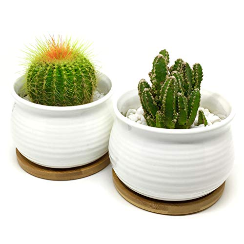- 4.3-Inch Round Rimmed White Ceramic Succulent Planter with Bamboo Tray | Set of Two | Minimalist Design