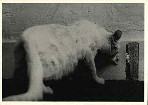 Mousehole Photographic Art Original Vintage Postcard from CardCow Vintage Postcards