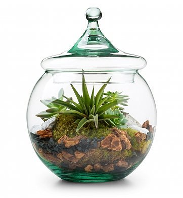Glass Globe Terrarium Kit - Unique Gift by GiftTree