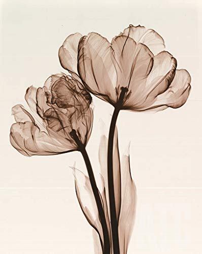 ArtToCanvas 24W x 30H inches : Parrot Tulips II by Steven N Meyers - Canvas w/Brushstrokes