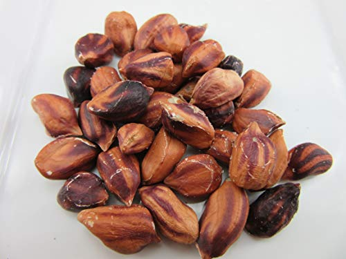 Wild Jungle Peanuts (Arachis hypogaea) Seeds by Robsrareandgiantseeds UPC0764425787167 Non-GMO,Organic,USA Grower,Landrace,1116 Package of 20 Seeds