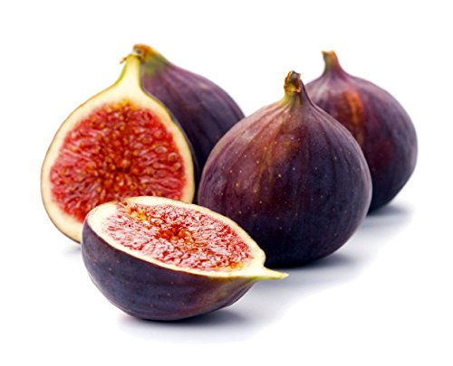 Beer's Black Edible Fig Plant - Ficus carica - Sweet/Dwarf - 4