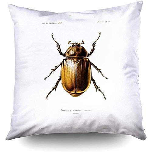(Vintage Beetle Decorative Throw Pillow Case 18X18Inch,Home Decoration Pillowcase Zippered Pillow Covers Cushion Cover with Words for Book Lover Worm Sofa Couch)