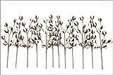 Cotton Stems Bulk - 12 Stems/Pack - 10 Cotton Buds/Stem - 20'' Tall - Farmhouse Style Floral Display Filler - Wedding Centerpiece