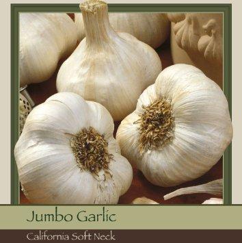 California Softneck Garlic, 6 Bulbs. Great for Fall Planting! Non GMO