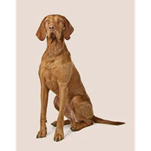 Wirehaired Vizsla: Artified Pets Dog Journal/Notebook/Diary 36