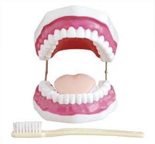 MG Scientific Dental Care Model